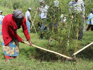 World Environmental Day - Tree-planting