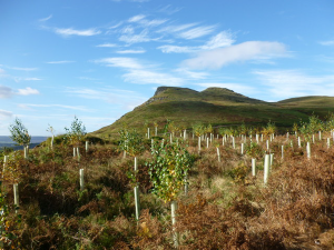 Tree planting for carbon offsets